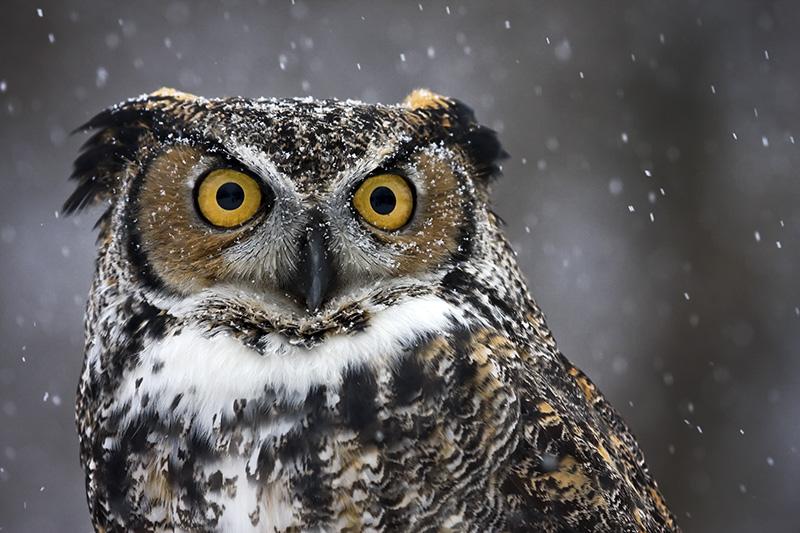 WEB_OWL_stiahnuť
