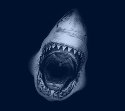 WEB_SHARK