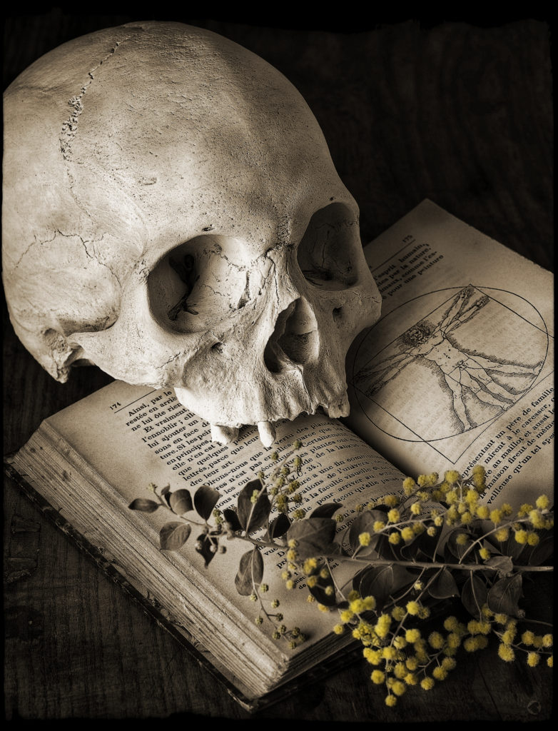"""Skull and Wattle"". (Photo by Kevin Best)"