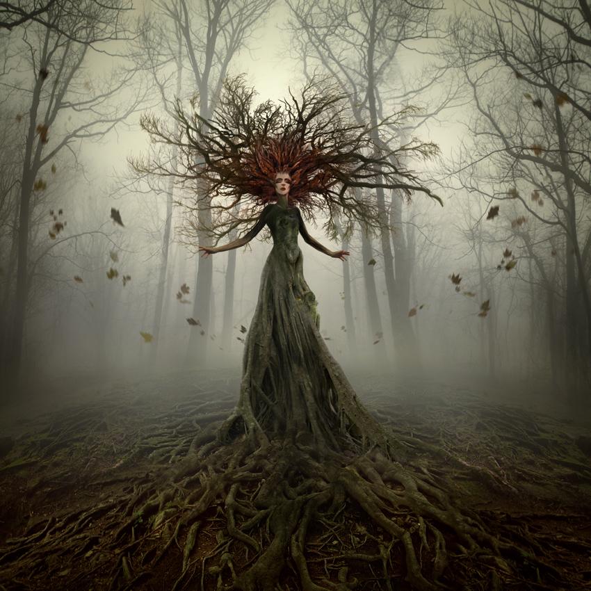 WEB_PRIRODNE_BYTOSTI_forest